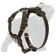 Studded Leather Black Russian Terrier Puppy Harness