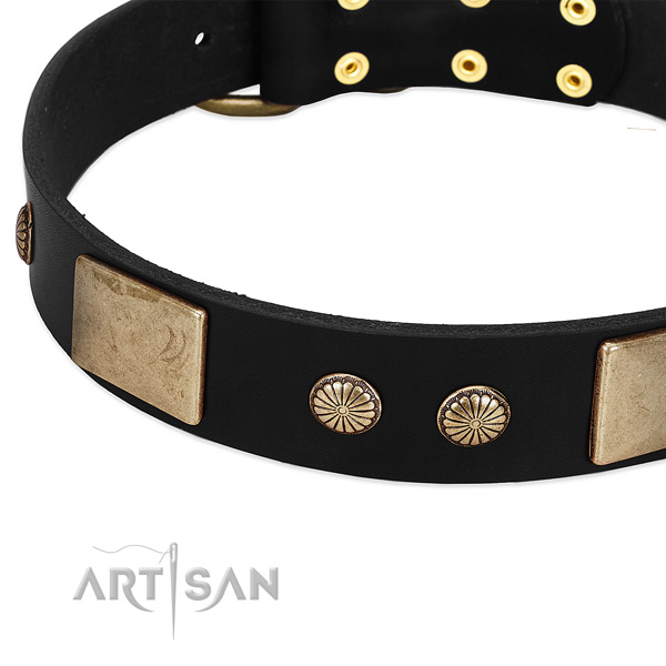 Full grain leather dog collar with studs for daily walking