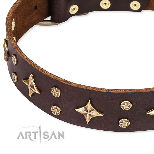 Fancy walking studded dog collar of durable natural leather