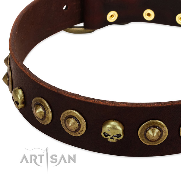 Unusual embellishments on leather collar for your canine