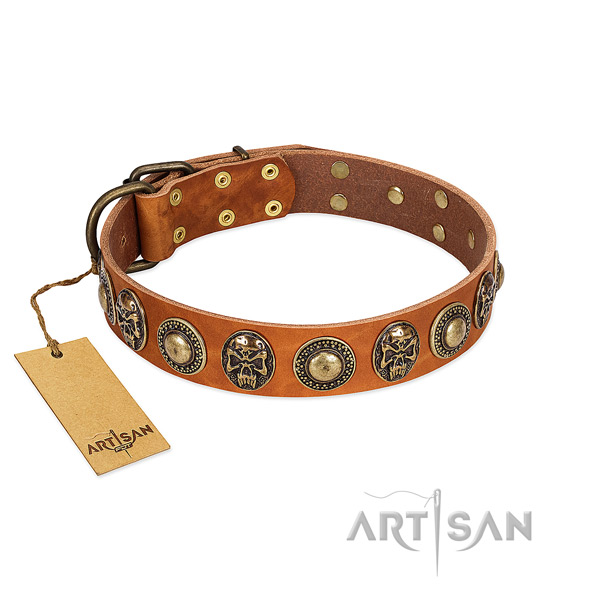 Adjustable full grain natural leather dog collar for everyday walking your dog