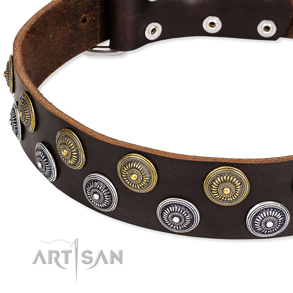 Daily walking adorned dog collar of fine quality full grain natural leather