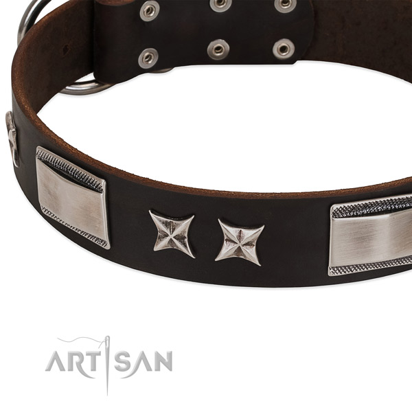 Fashionable collar of leather for your beautiful doggie