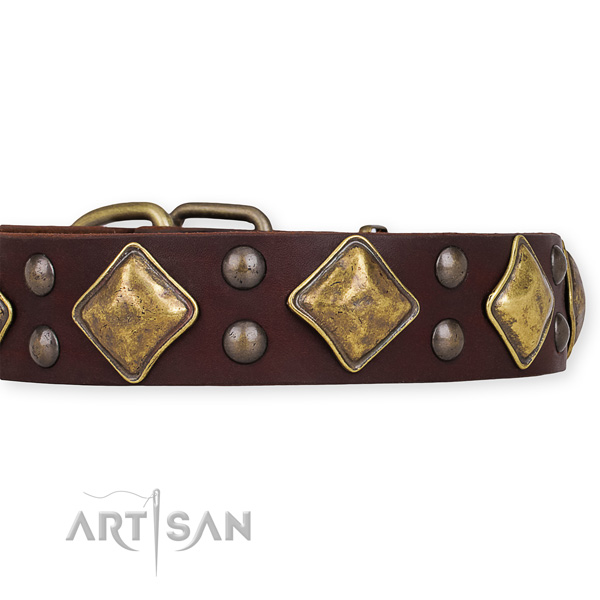 Natural leather dog collar with trendy durable studs