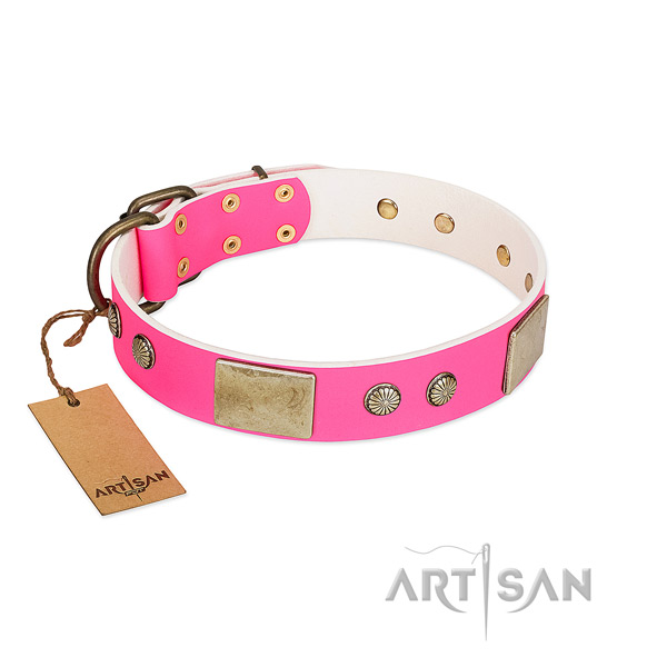 Rust resispinkt decorations on daily walking dog collar