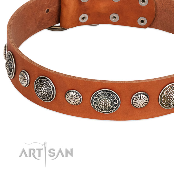 Full grain natural leather collar with rust resistant fittings for your attractive dog