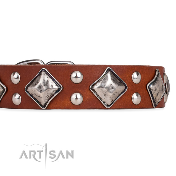 Full grain genuine leather dog collar with extraordinary rust-proof studs