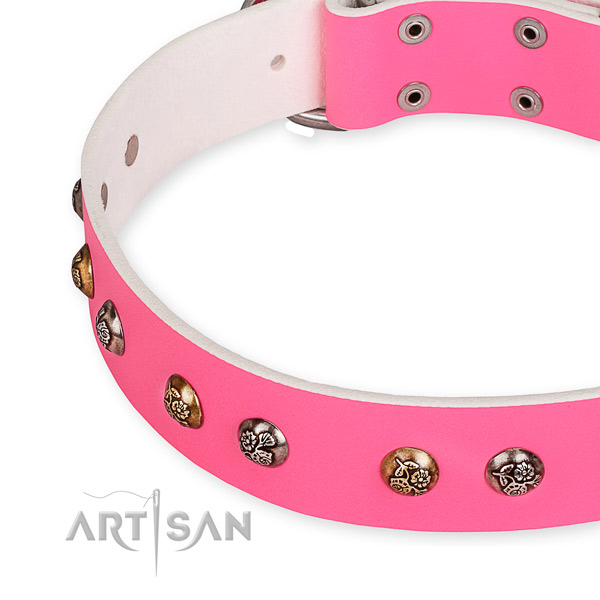 Full grain leather dog collar with significant corrosion resistant adornments