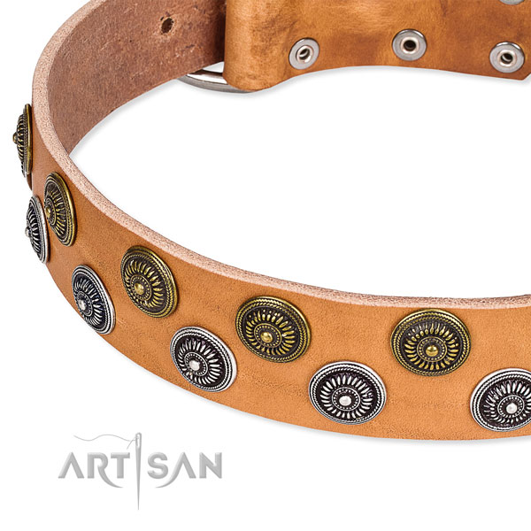 Daily use embellished dog collar of quality leather