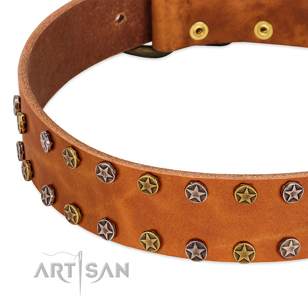 Daily use full grain genuine leather dog collar with significant embellishments