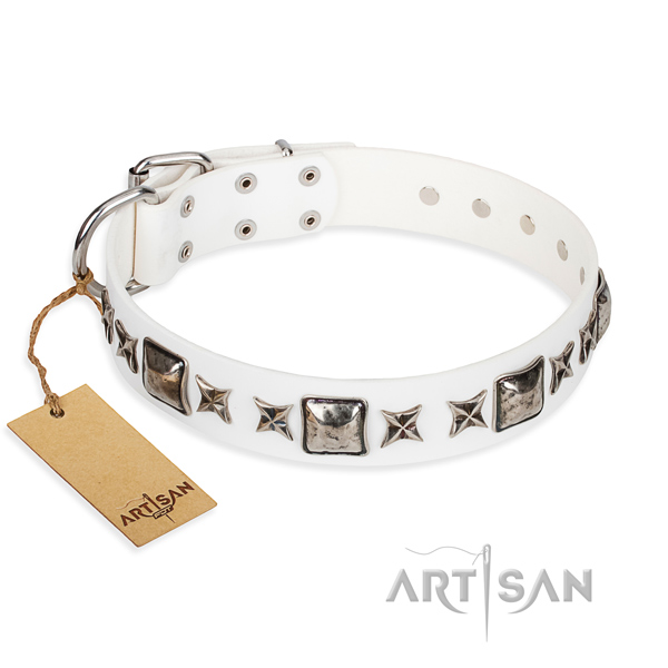 Daily walking dog collar of finest quality natural leather with studs