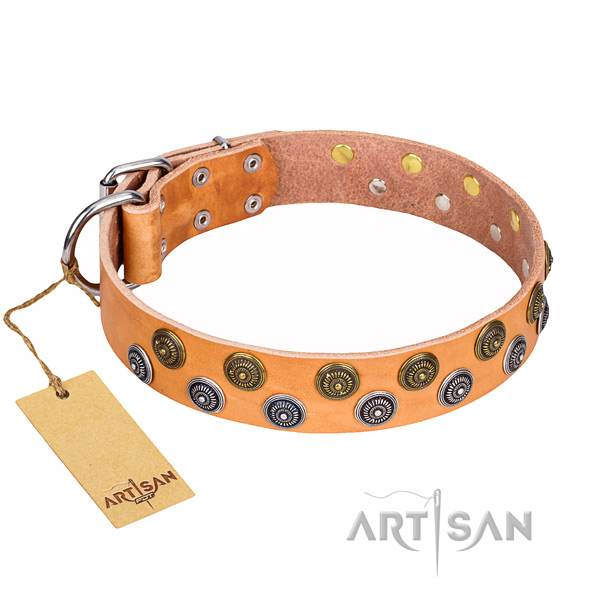 Comfortable wearing dog collar of reliable full grain natural leather with studs