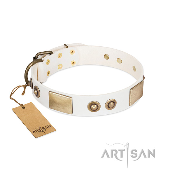 Corrosion resistant adornments on leather dog collar for your doggie