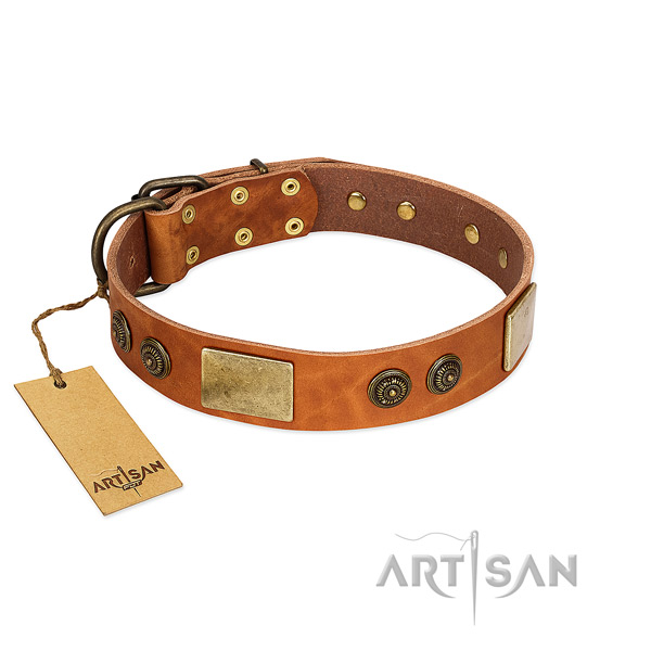 Best quality full grain natural leather dog collar for basic training