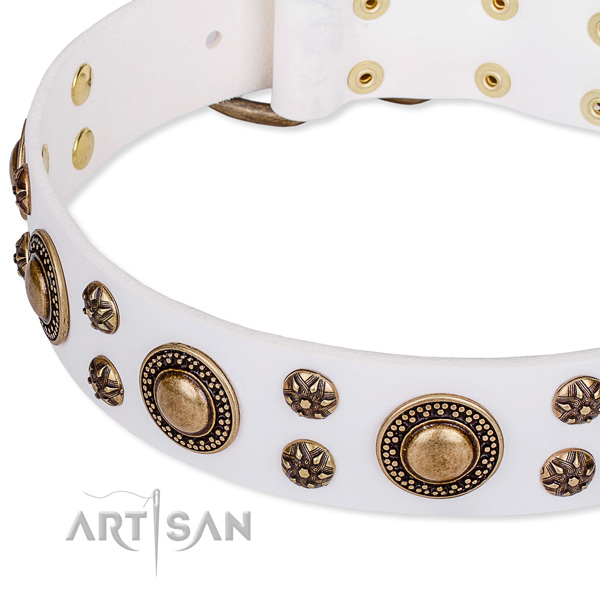 Everyday walking studded dog collar of strong leather