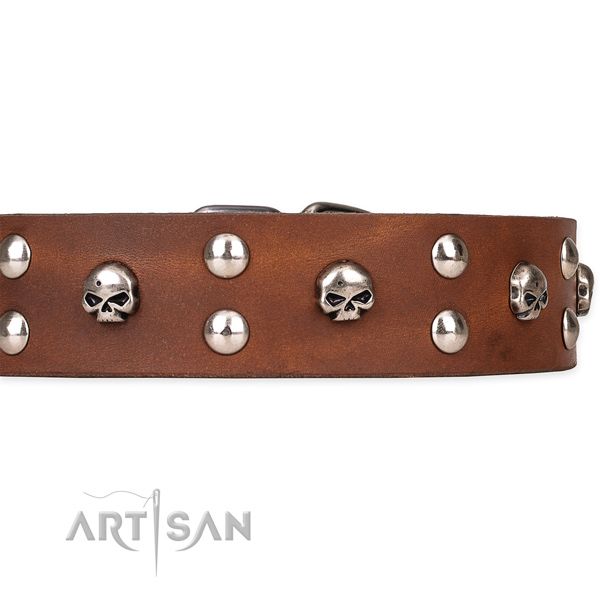 Walking embellished dog collar of best quality leather
