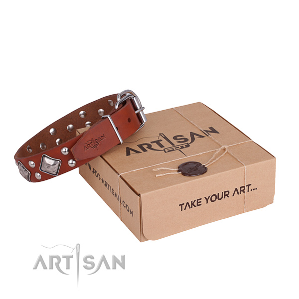 Fancy walking dog collar with Remarkable rust resistant adornments