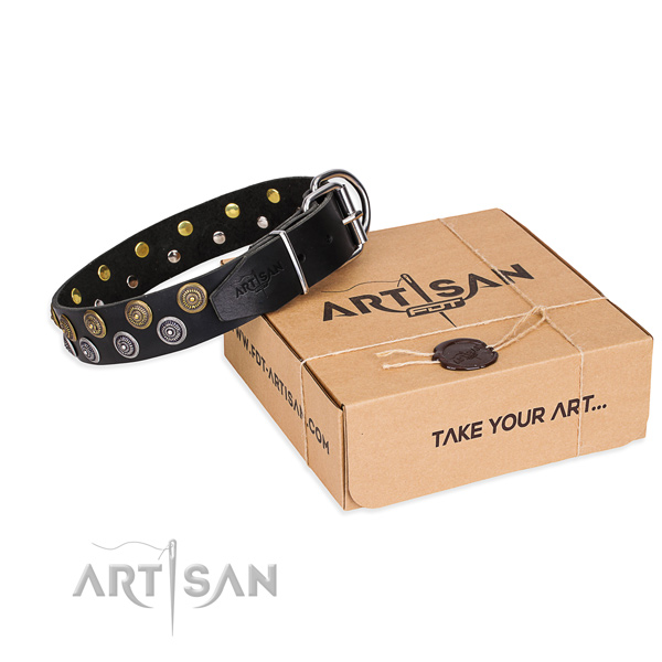 Everyday walking dog collar of durable full grain natural leather with studs