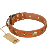 """Visual Magic"" FDT Artisan Tan Leather Black Russian Terrier Collar for Daily Activities"