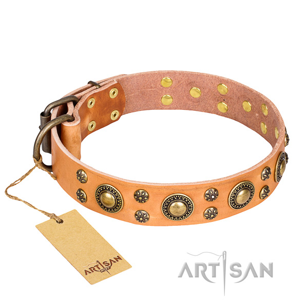 Stylish walking dog collar of finest quality leather with decorations