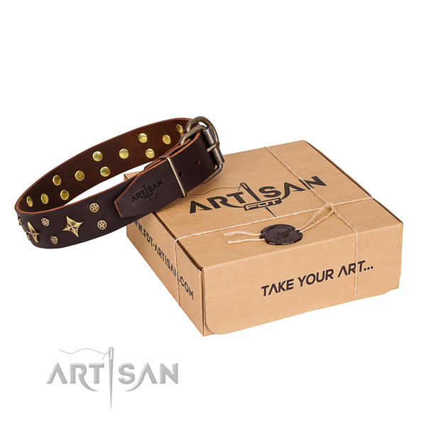 Everyday walking dog collar of quality full grain natural leather with adornments