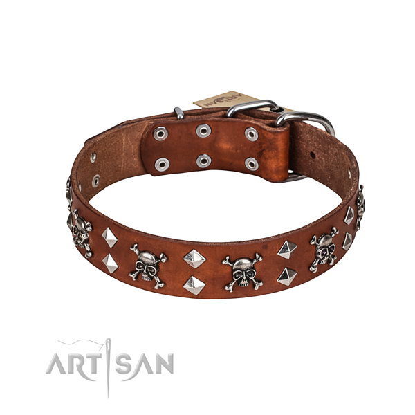 Fancy walking dog collar of fine quality genuine leather with studs