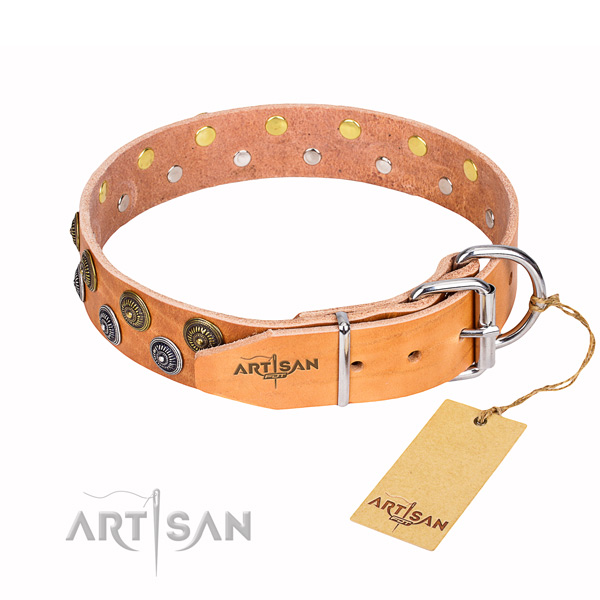 Everyday walking embellished dog collar of finest quality leather