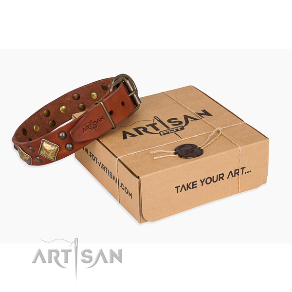 Comfy wearing dog collar with Exceptional rust resistant studs