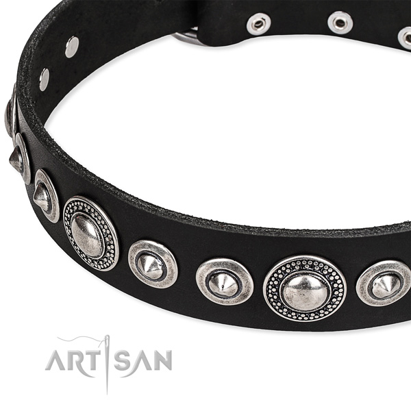 Comfy wearing studded dog collar of top quality full grain natural leather
