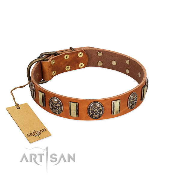 Trendy genuine leather dog collar for stylish walking