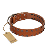 """Star Light"" Stylish FDT Artisan Tan Leather Black Russian Terrier Collar with Silver-Like Studs"