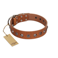 """Silver Age"" Fashionable FDT Artisan Tan Leather Black Russian Terrier Collar with Silver-Like Studs"