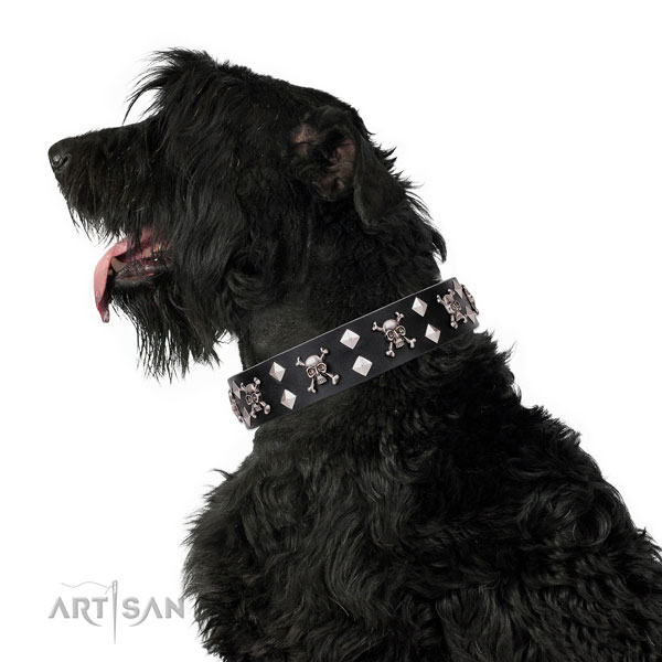 Fancy walking adorned dog collar of finest quality genuine leather