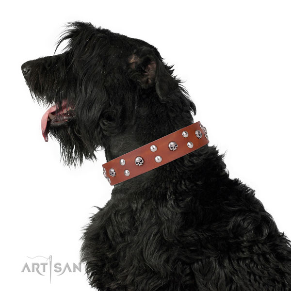 Everyday walking embellished dog collar of reliable leather
