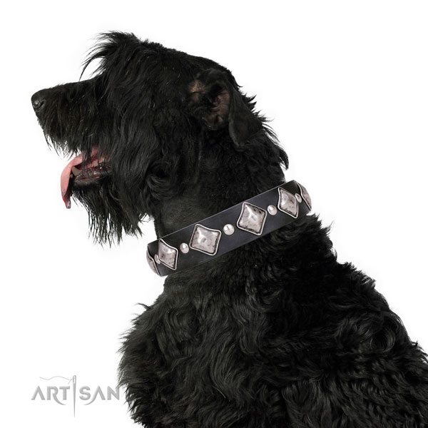 Fancy walking studded dog collar of top notch natural leather