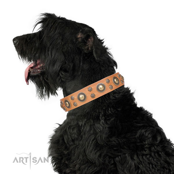 Everyday walking decorated dog collar of fine quality material