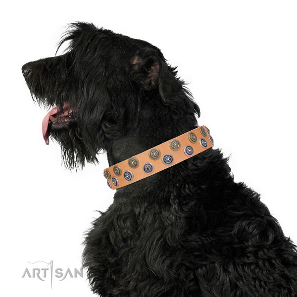 Fancy walking studded dog collar of quality material