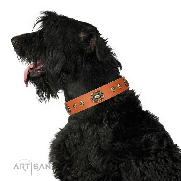 Significant adorned genuine leather dog collar for fancy walking