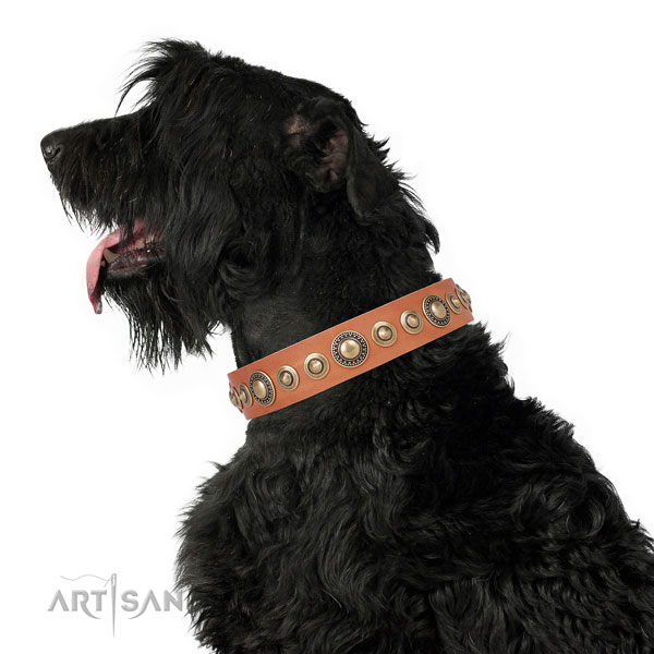Rust resistant buckle and D-ring on leather dog collar for daily use