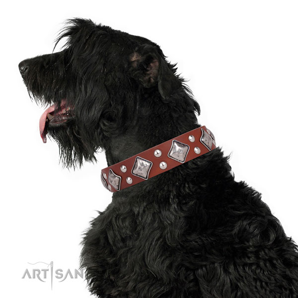Fancy walking adorned dog collar made of top notch natural leather