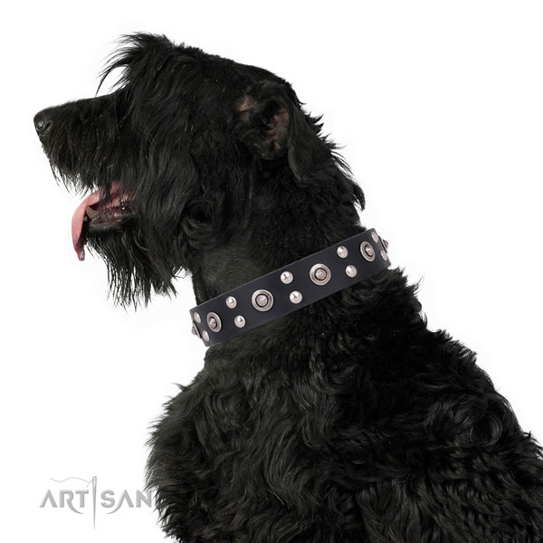 Stylish walking embellished dog collar made of high quality natural leather
