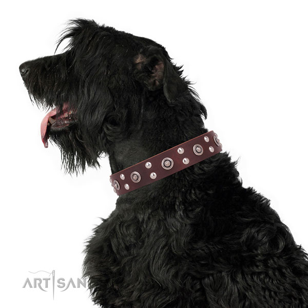Everyday walking studded dog collar made of top rate genuine leather