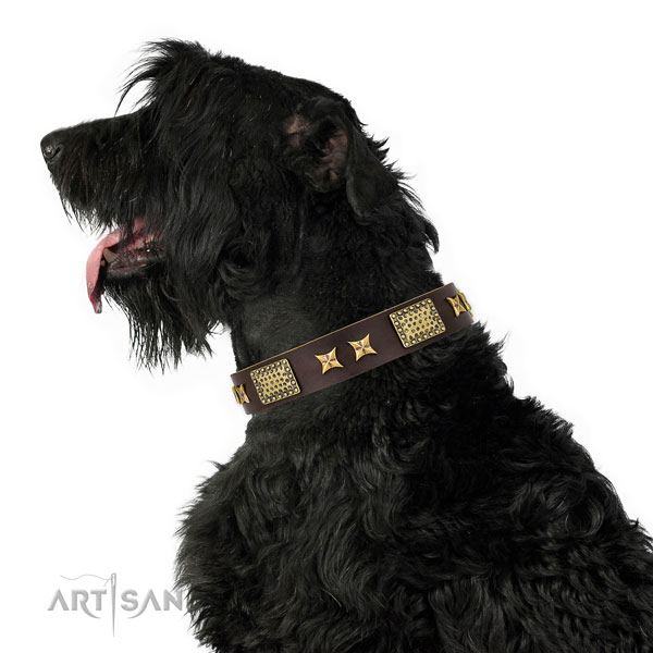 Fancy walking dog collar with extraordinary decorations