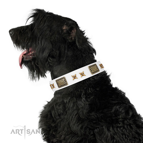 Comfy wearing dog collar with significant studs