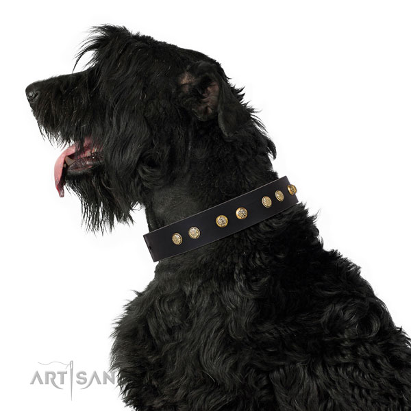 Amazing studs on everyday walking full grain genuine leather dog collar