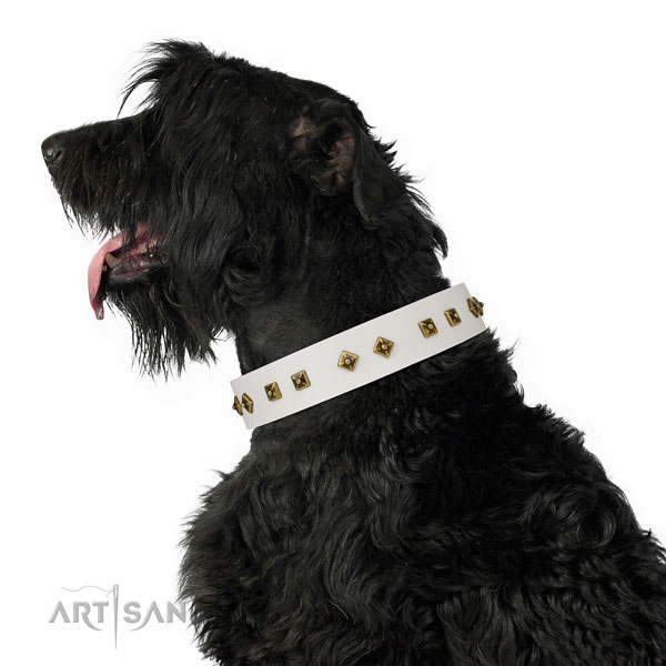 Exceptional adornments on walking dog collar