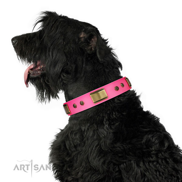 Comfy wearing dog collar of leather with amazing embellishments