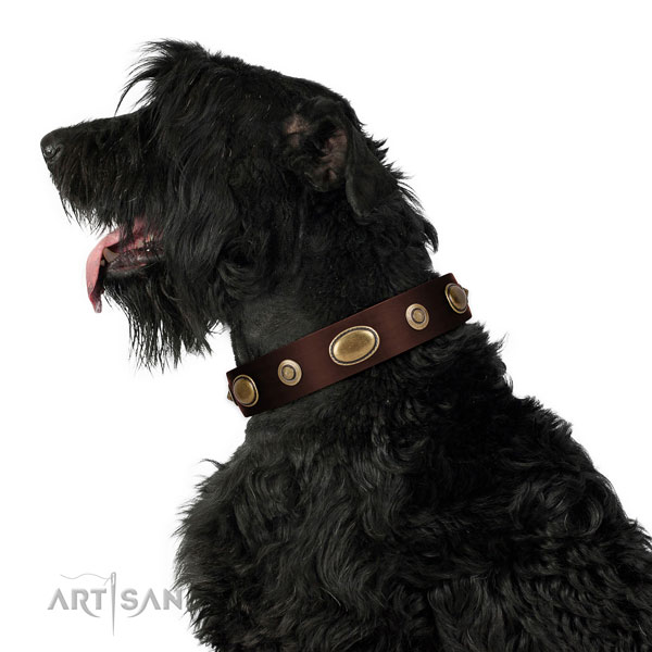Stylish walking dog collar of genuine leather with stunning decorations