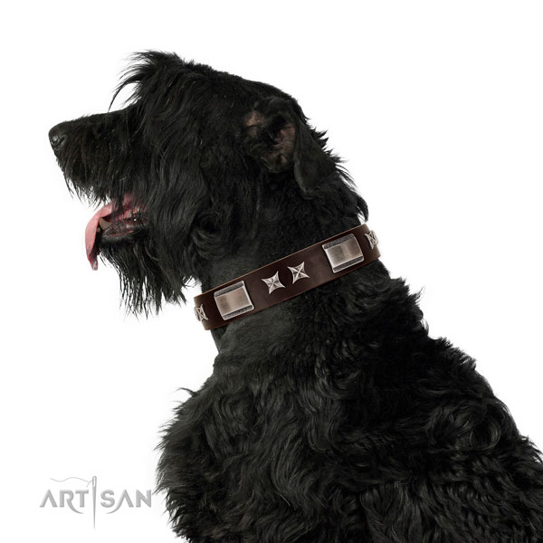 Studded collar of full grain genuine leather for your handsome four-legged friend