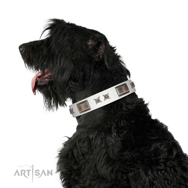 Studded collar of genuine leather for your handsome canine